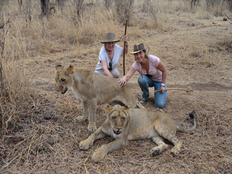 Petting tame Lions